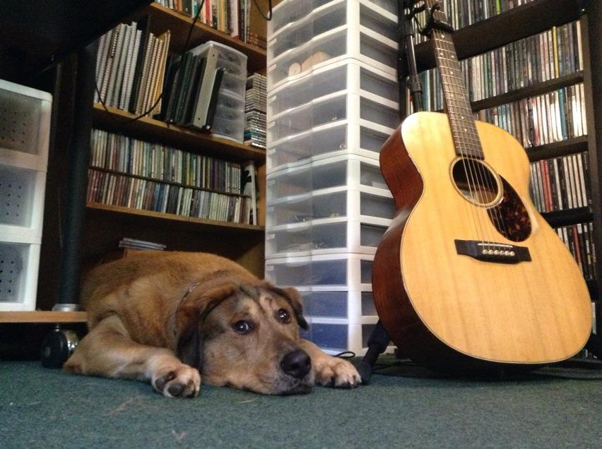 Studio Dog Calvin helping out in an overdub session